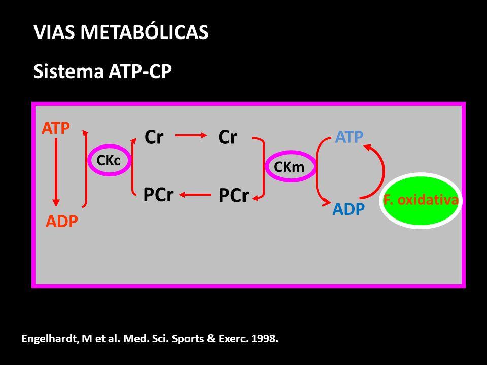 VIAS METABÓLICAS Sistema ATP-CP Cr Cr PCr PCr ATP ATP ADP ADP CKc CKm