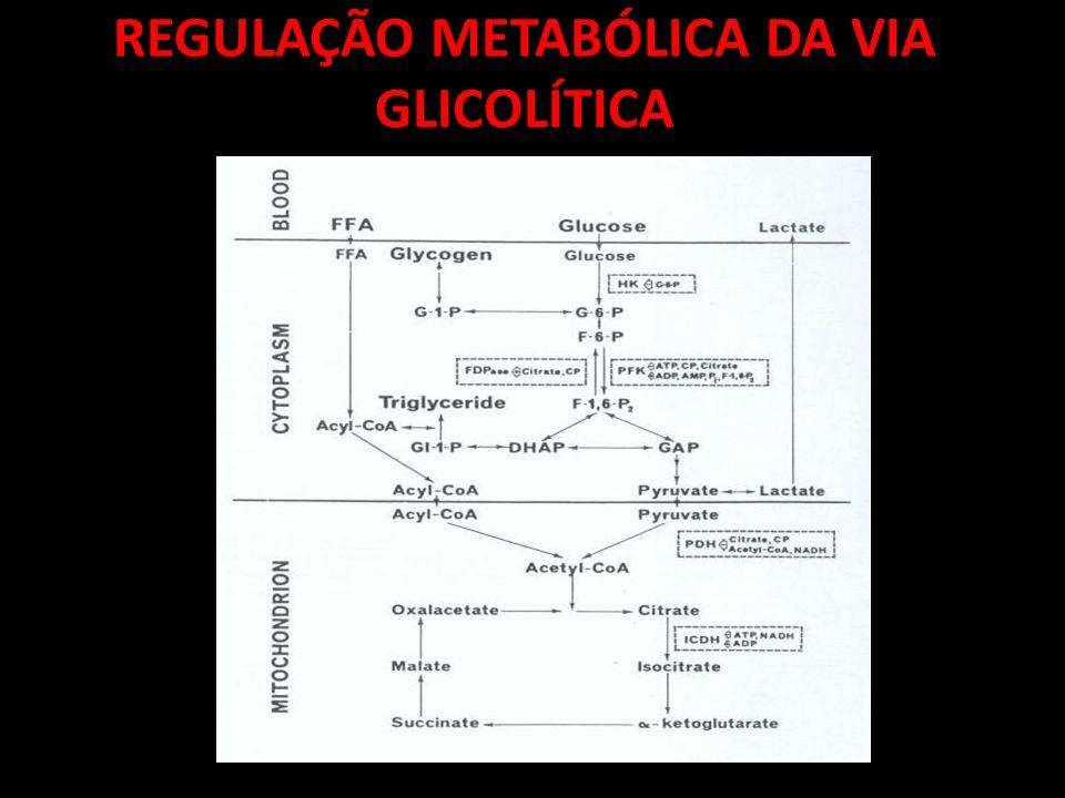 REGULAÇÃO METABÓLICA DA VIA GLICOLÍTICA
