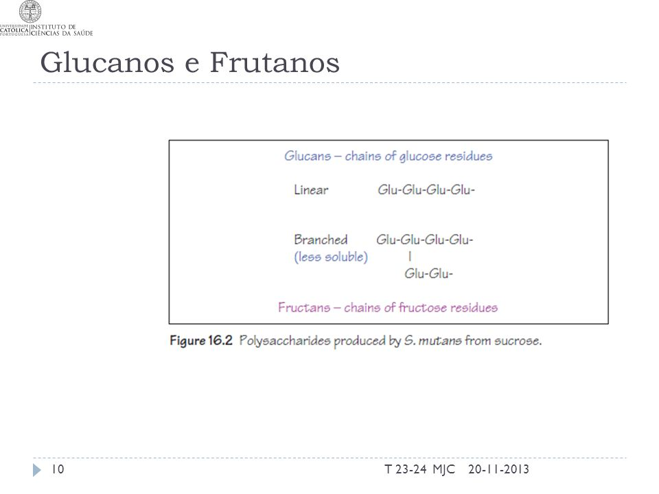 Glucanos e Frutanos T 23-24 MJC 20-11-2013