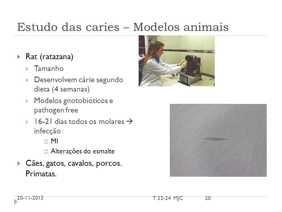 Estudo das caries – Modelos animais