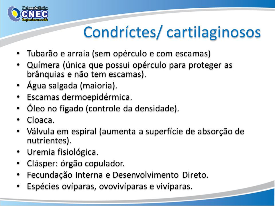 Condríctes/ cartilaginosos