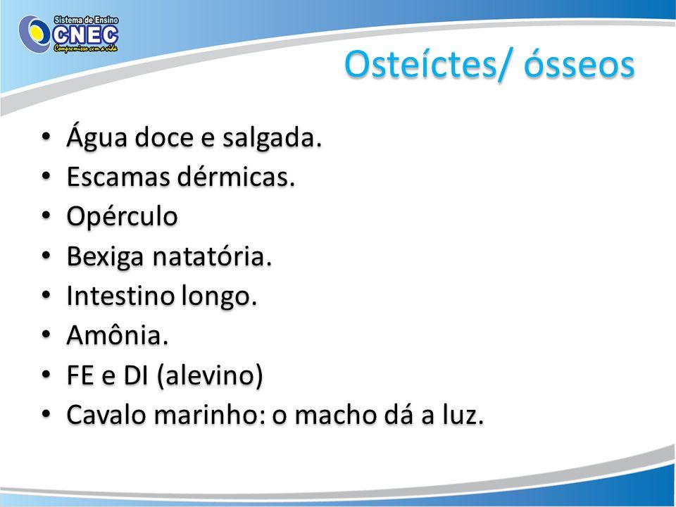 Osteíctes/ ósseos Água doce e salgada. Escamas dérmicas. Opérculo