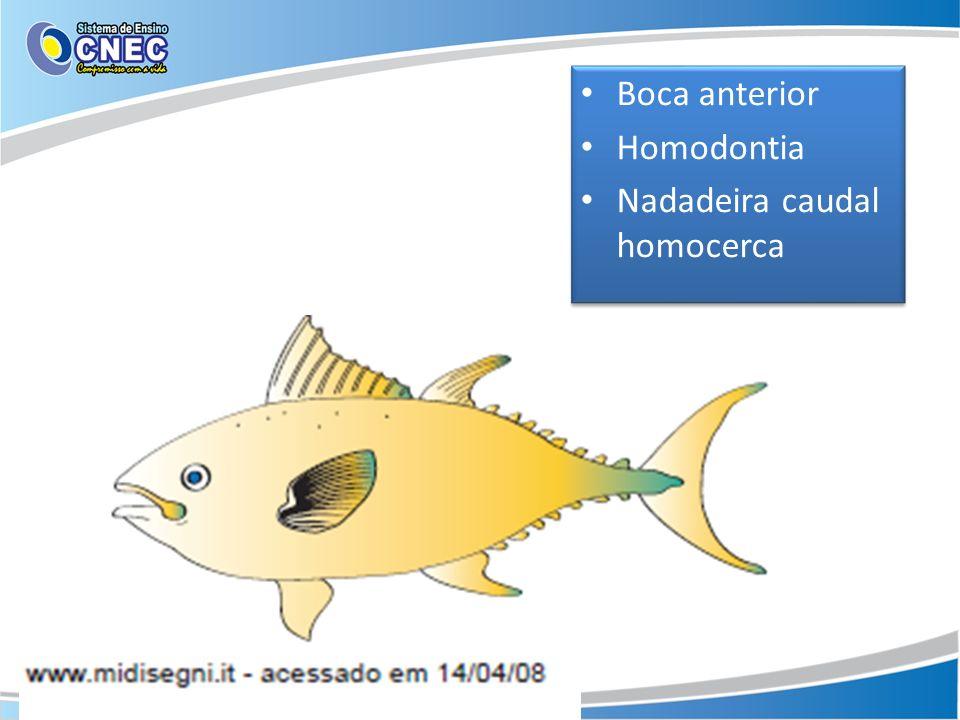 Boca anterior Homodontia Nadadeira caudal homocerca