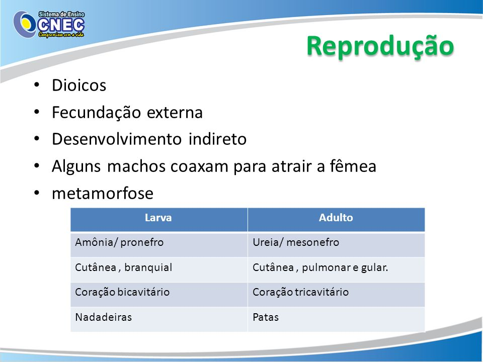Reprodução Dioicos Fecundação externa Desenvolvimento indireto