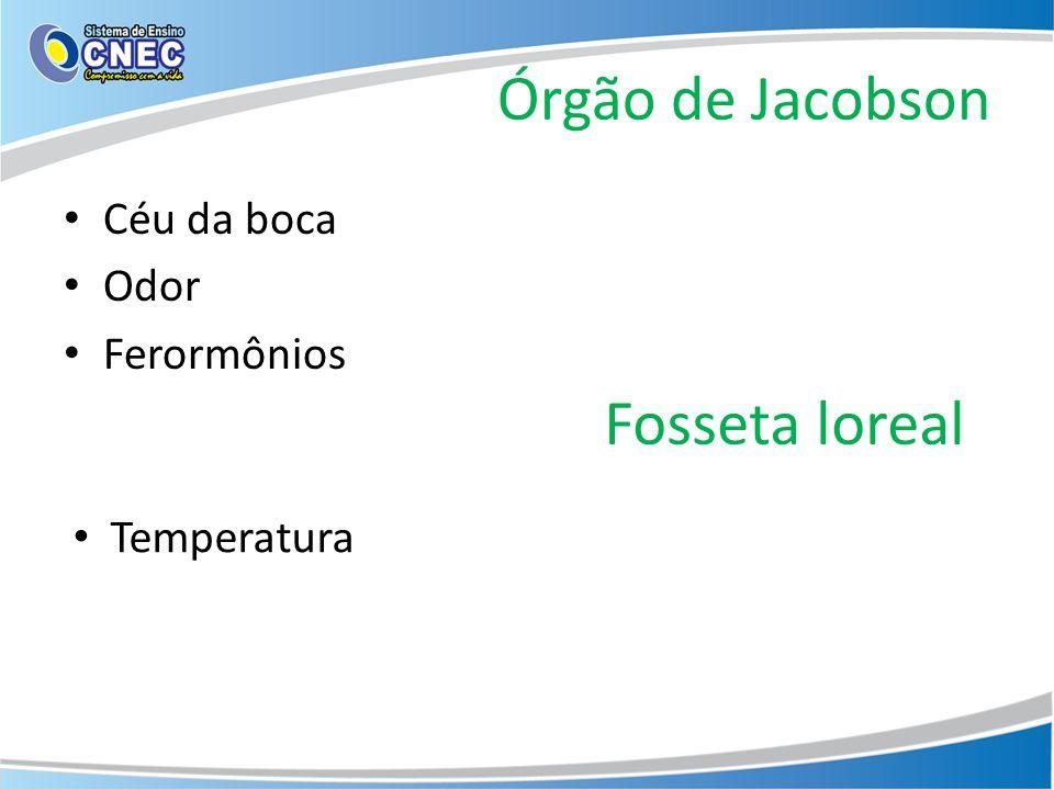 Órgão de Jacobson Fosseta loreal Céu da boca Odor Ferormônios