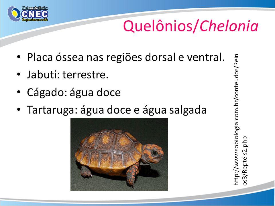 Quelônios/Chelonia Placa óssea nas regiões dorsal e ventral.