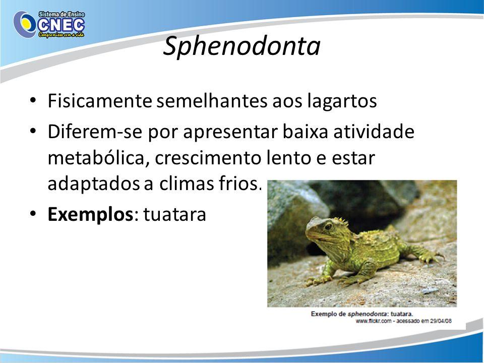 Sphenodonta Fisicamente semelhantes aos lagartos