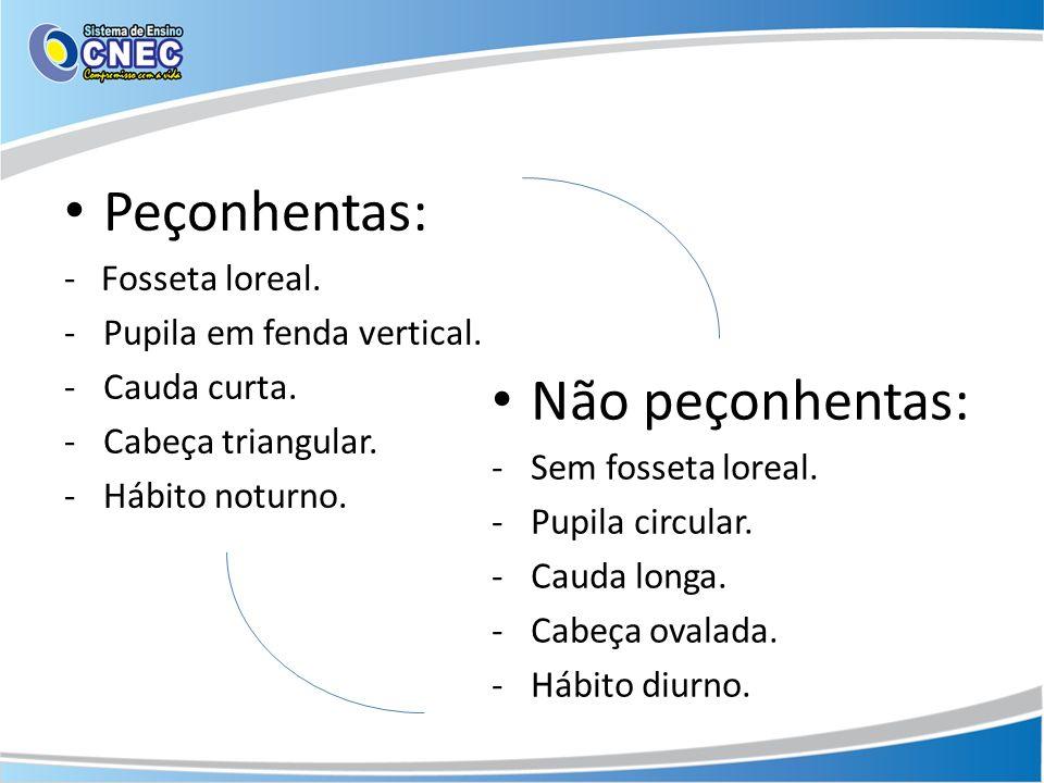 Peçonhentas: Não peçonhentas: - Fosseta loreal.