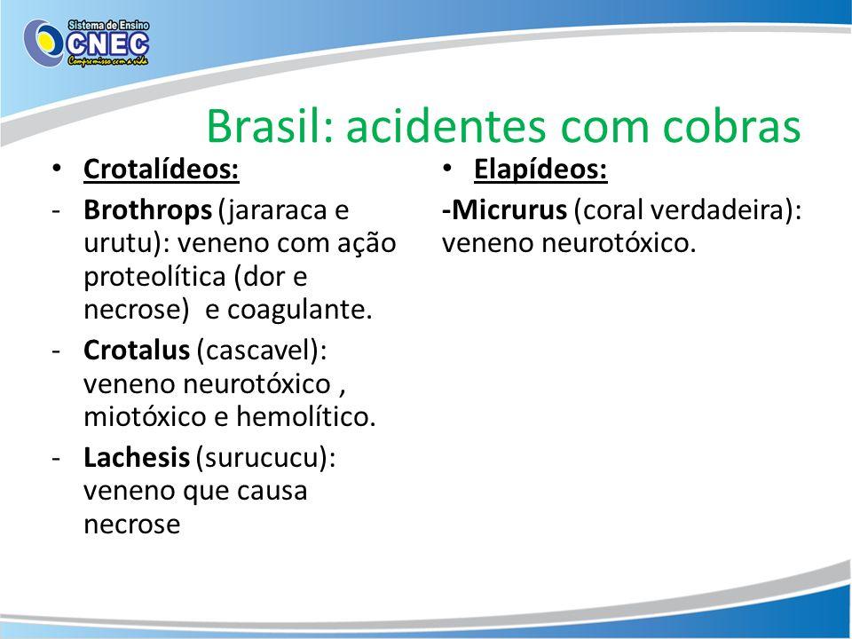 Brasil: acidentes com cobras