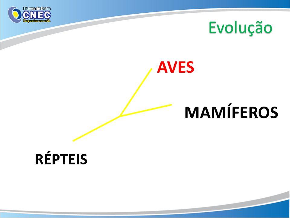 Evolução AVES MAMÍFEROS RÉPTEIS