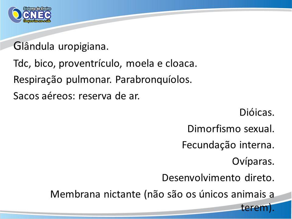 Glândula uropigiana. Tdc, bico, proventrículo, moela e cloaca.
