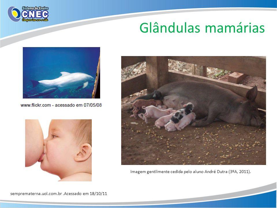 Imagem gentilmente cedida pelo aluno André Dutra (3ºA, 2011).