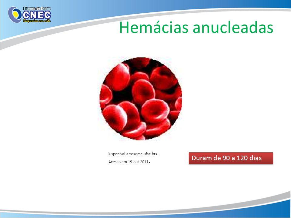 Hemácias anucleadas Duram de 90 a 120 dias