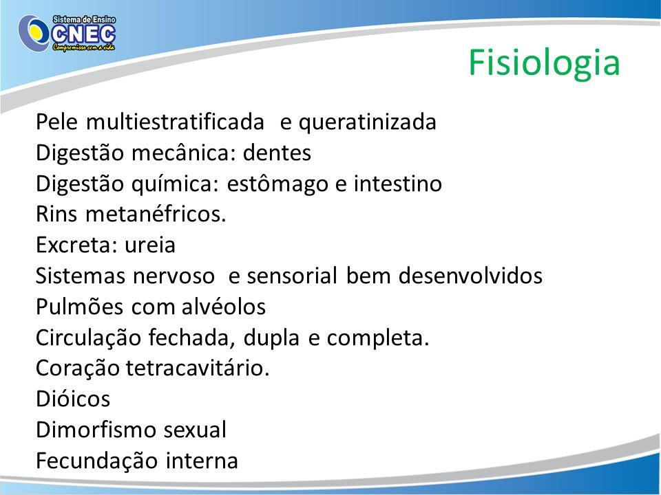 Fisiologia Pele multiestratificada e queratinizada