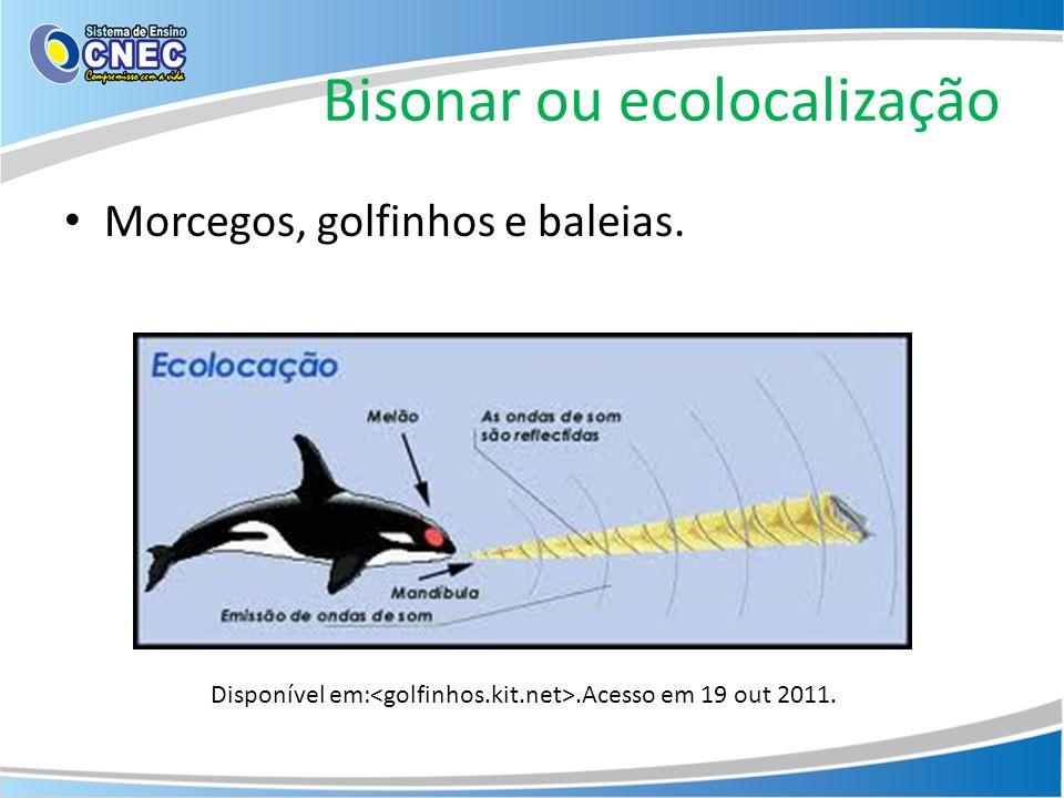 Bisonar ou ecolocalização