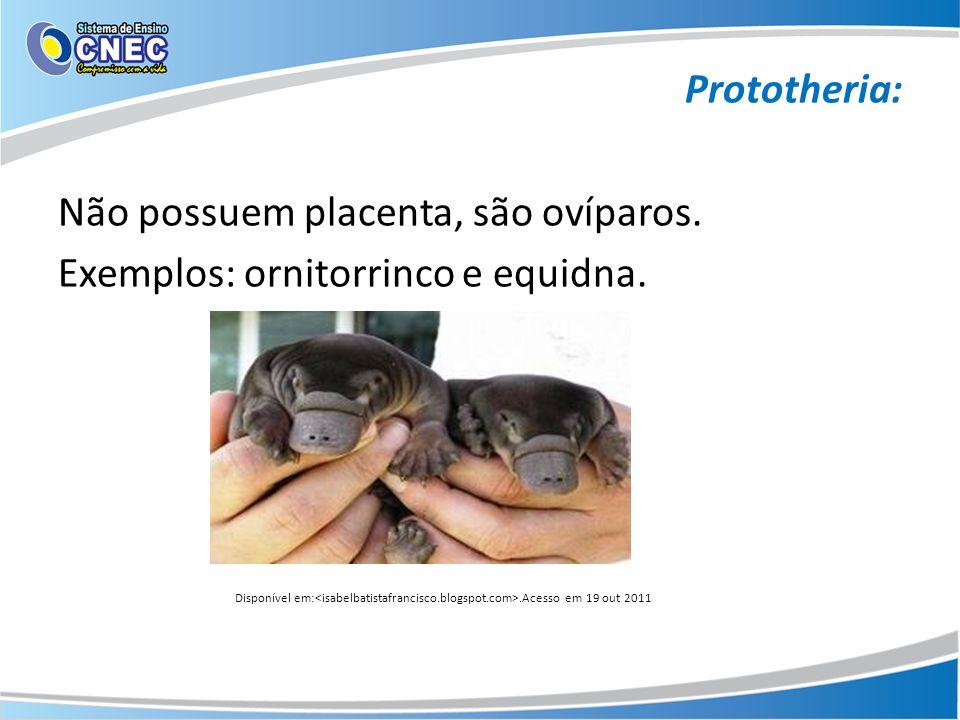 Prototheria: Não possuem placenta, são ovíparos