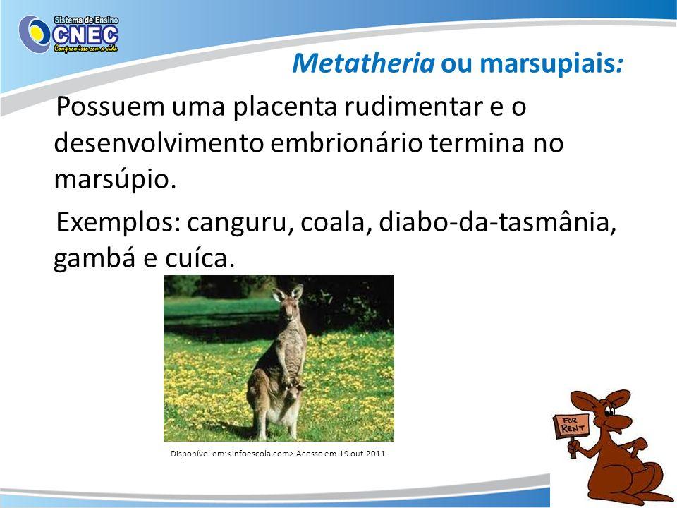 Metatheria ou marsupiais: Possuem uma placenta rudimentar e o desenvolvimento embrionário termina no marsúpio. Exemplos: canguru, coala, diabo-da-tasmânia, gambá e cuíca.