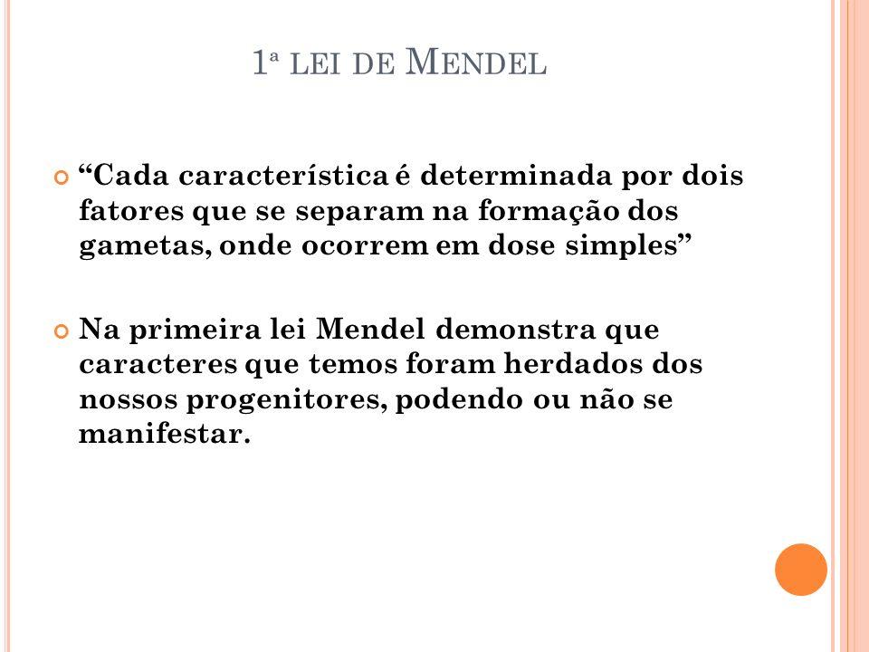 1ª lei de Mendel Cada característica é determinada por dois fatores que se separam na formação dos gametas, onde ocorrem em dose simples
