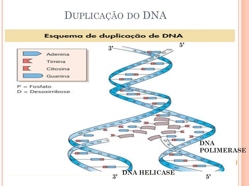 Duplicação do DNA 5' 3' DNA POLIMERASE DNA HELICASE 3' 5'