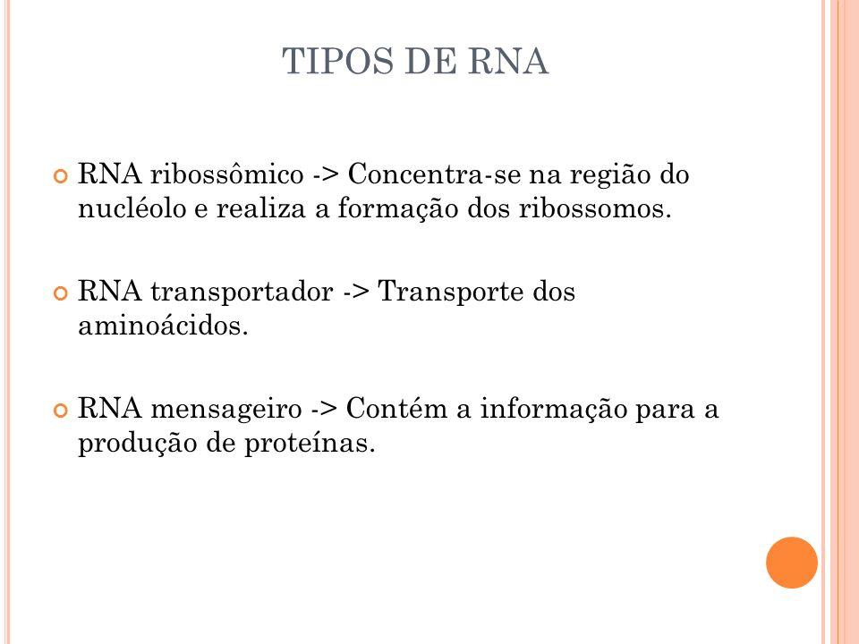 TIPOS DE RNA RNA ribossômico -> Concentra-se na região do nucléolo e realiza a formação dos ribossomos.