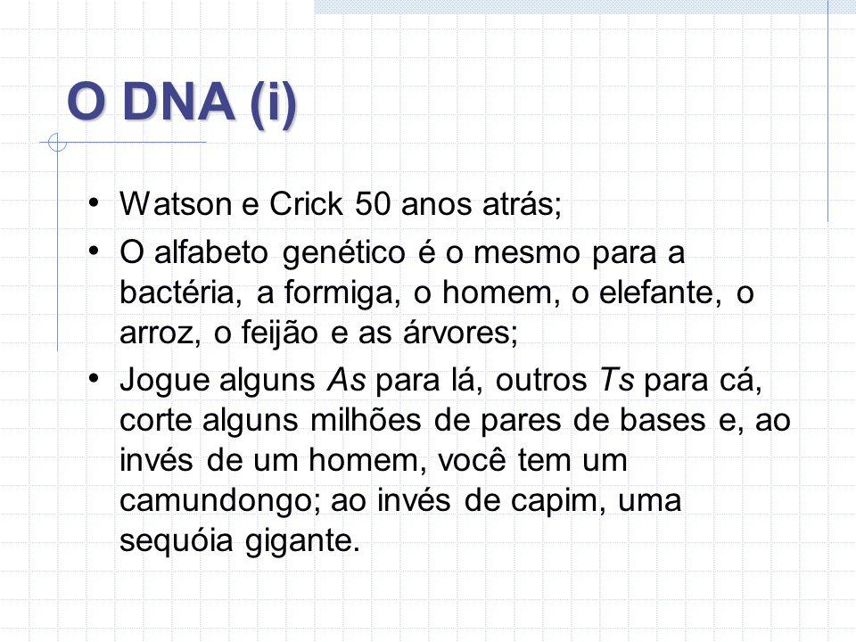 O DNA (i) Watson e Crick 50 anos atrás;
