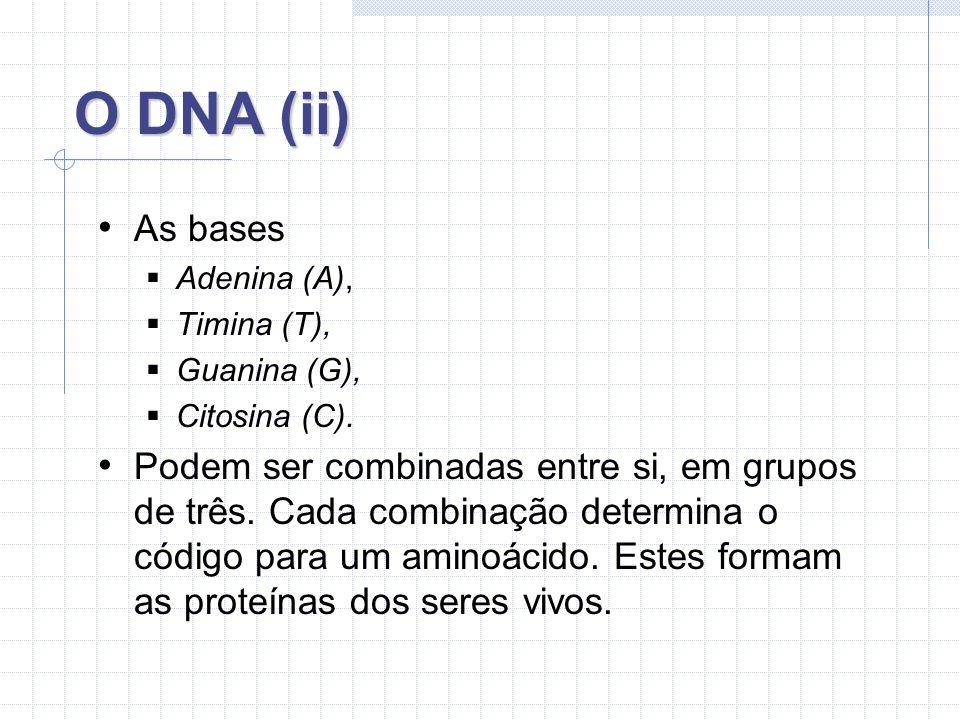 O DNA (ii) As bases. Adenina (A), Timina (T), Guanina (G), Citosina (C).