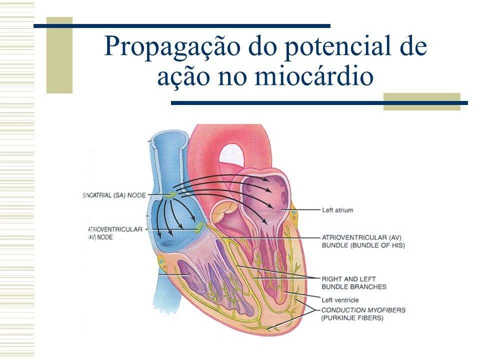 Propagação do potencial de ação no miocárdio