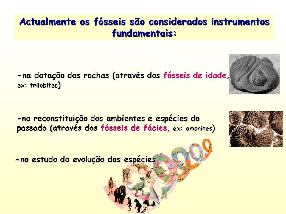 Actualmente os fósseis são considerados instrumentos fundamentais: