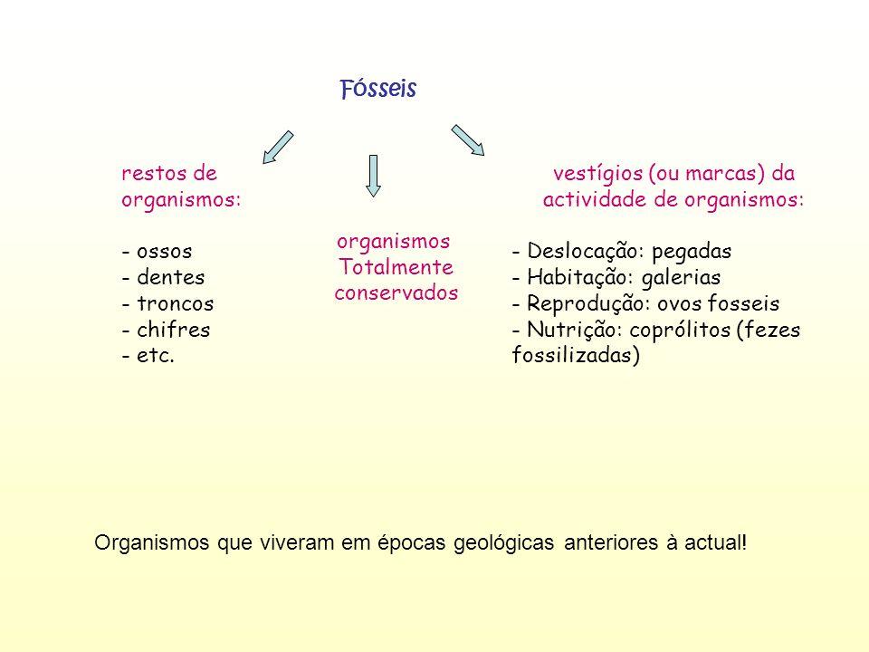 vestígios (ou marcas) da actividade de organismos: