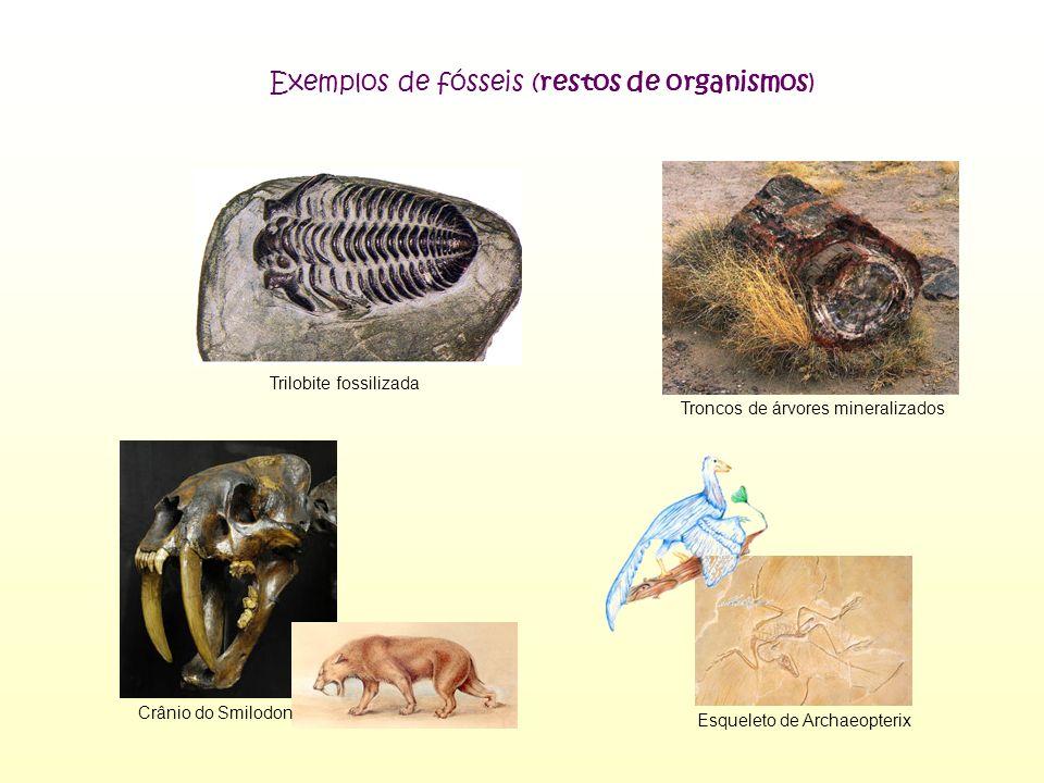 Exemplos de fósseis (restos de organismos)