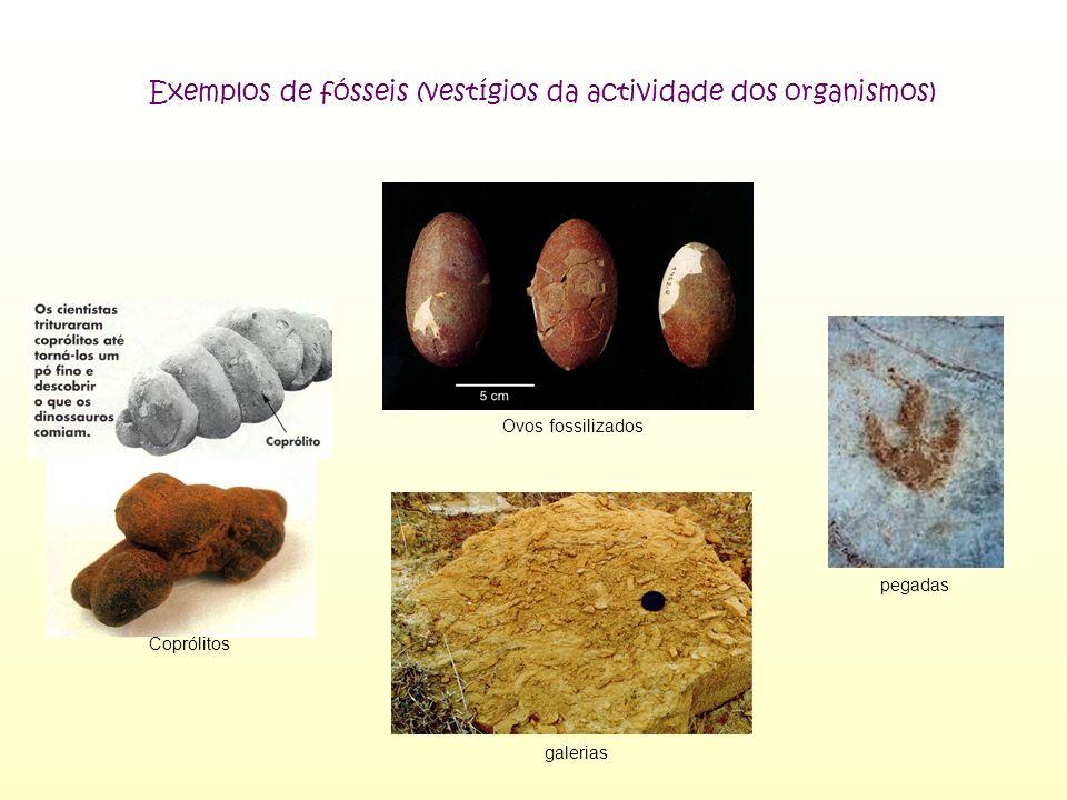 Exemplos de fósseis (vestígios da actividade dos organismos)