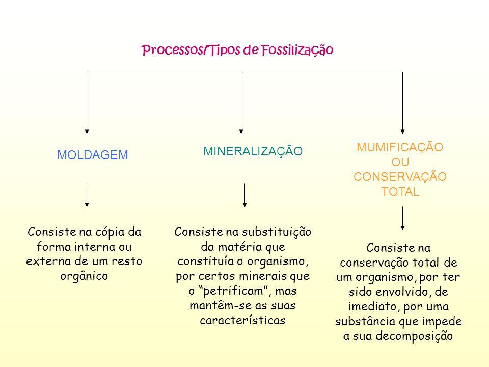 Processos/Tipos de Fossilização