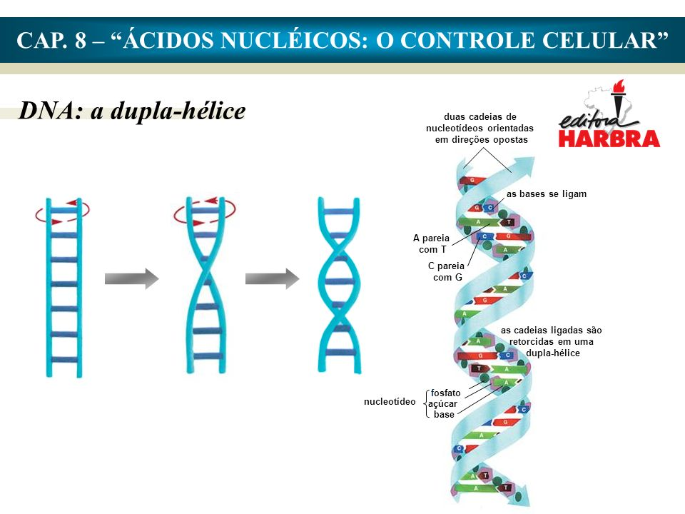 CAP. 8 – ÁCIDOS NUCLÉICOS: O CONTROLE CELULAR
