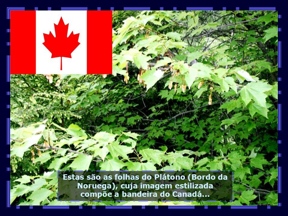 IMG_1903 - CANADÁ - QUEBEC - CANYON DE SANT ANNE-680