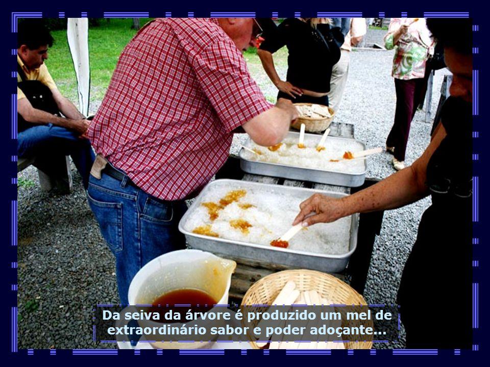 IMG_1472 - CANADÁ - QUEBEC - SEIVA DO PLÁTANOS-680
