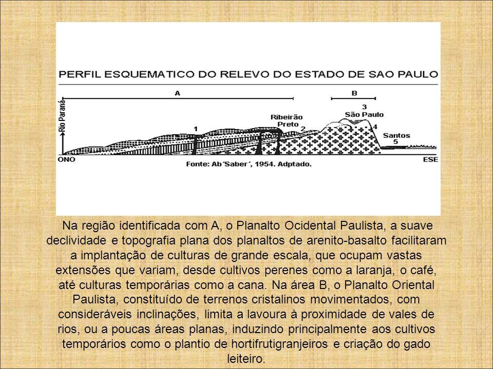 Na região identificada com A, o Planalto Ocidental Paulista, a suave declividade e topografia plana dos planaltos de arenito-basalto facilitaram a implantação de culturas de grande escala, que ocupam vastas extensões que variam, desde cultivos perenes como a laranja, o café, até culturas temporárias como a cana. Na área B, o Planalto Oriental Paulista, constituído de terrenos cristalinos movimentados, com consideráveis inclinações, limita a lavoura à proximidade de vales de rios, ou a poucas áreas planas, induzindo principalmente aos cultivos temporários como o plantio de hortifrutigranjeiros e criação do gado leiteiro.