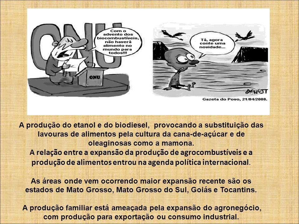 A produção do etanol e do biodiesel, provocando a substituição das lavouras de alimentos pela cultura da cana-de-açúcar e de oleaginosas como a mamona.
