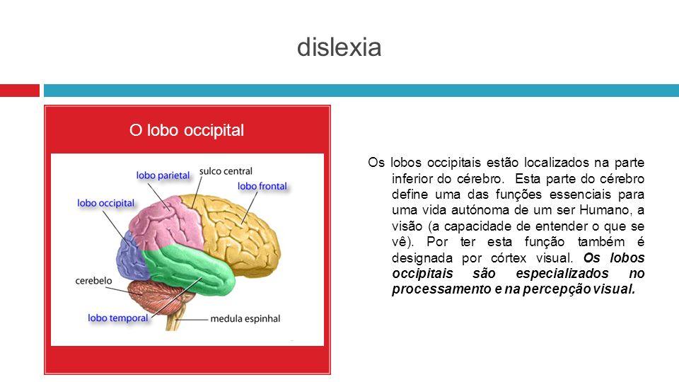 dislexia O lobo occipital