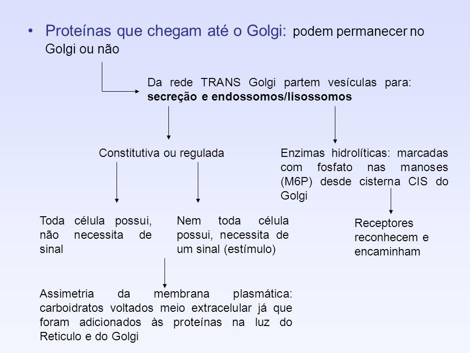 Proteínas que chegam até o Golgi: podem permanecer no Golgi ou não