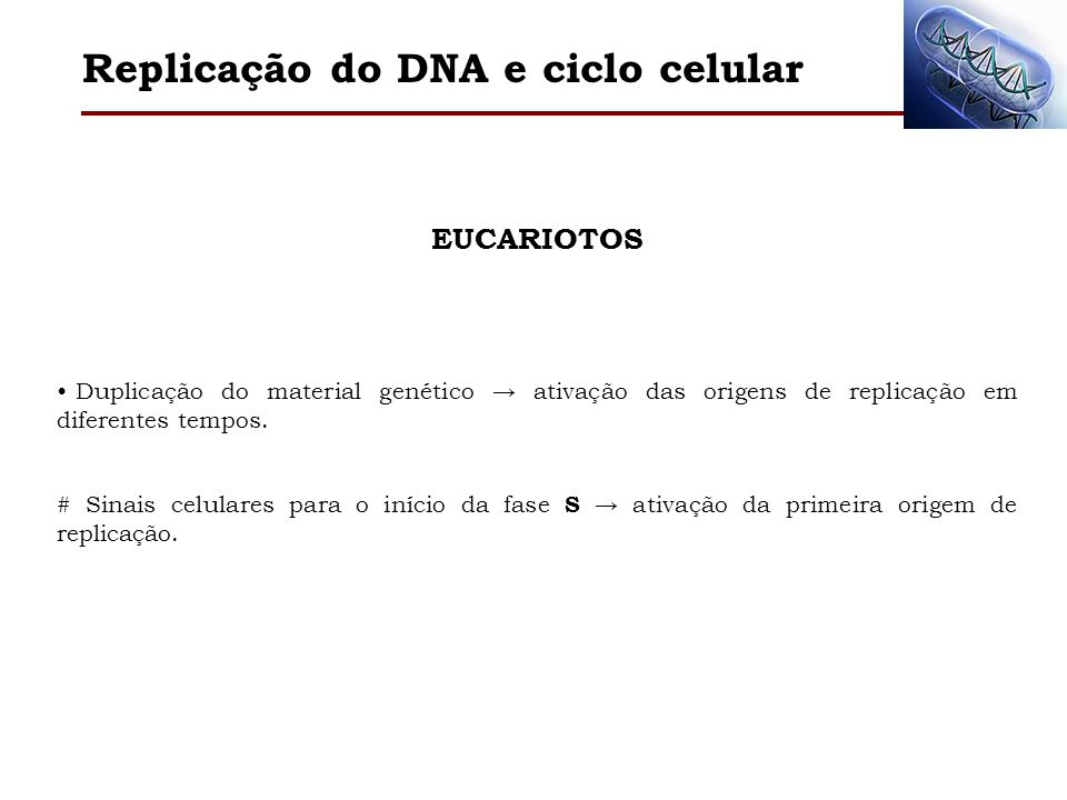 Replicação do DNA e ciclo celular
