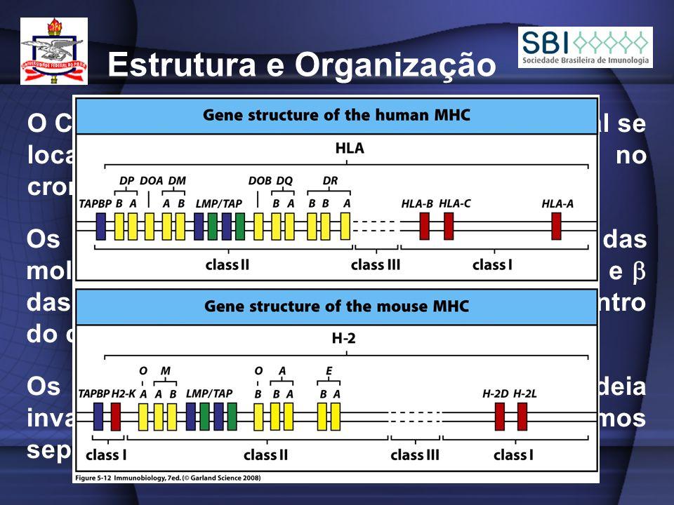 Estrutura e Organização