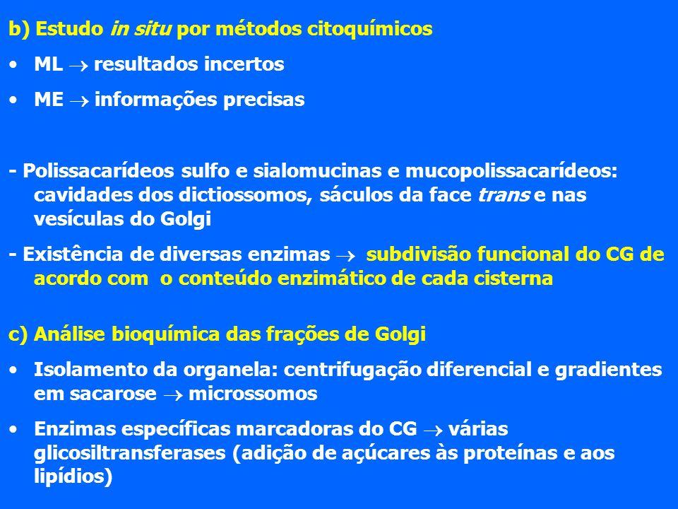 b) Estudo in situ por métodos citoquímicos