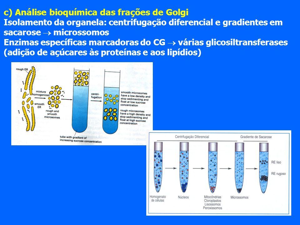 c) Análise bioquímica das frações de Golgi