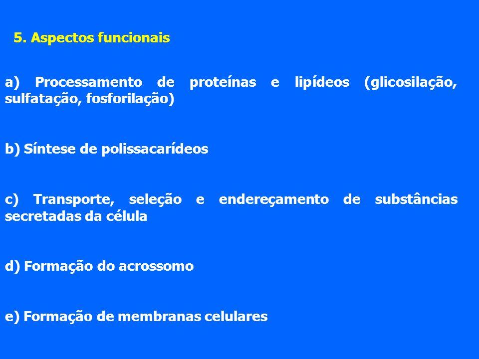 5. Aspectos funcionais a) Processamento de proteínas e lipídeos (glicosilação, sulfatação, fosforilação)