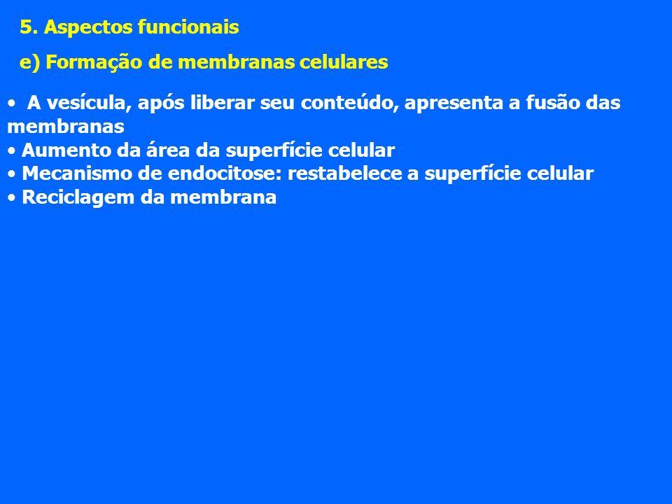 5. Aspectos funcionais e) Formação de membranas celulares. A vesícula, após liberar seu conteúdo, apresenta a fusão das membranas.