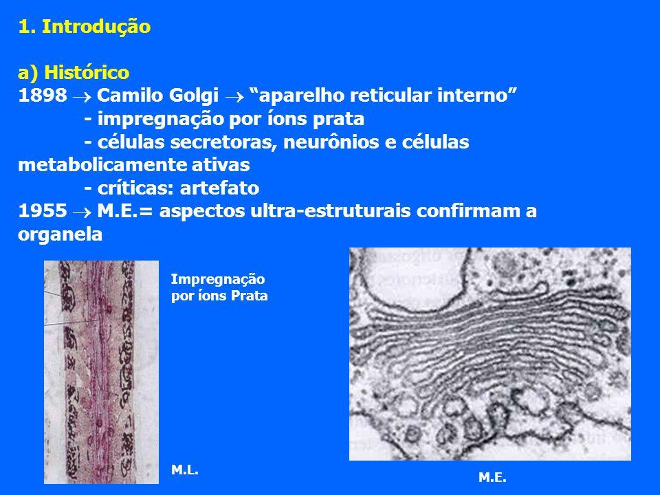 1898  Camilo Golgi  aparelho reticular interno