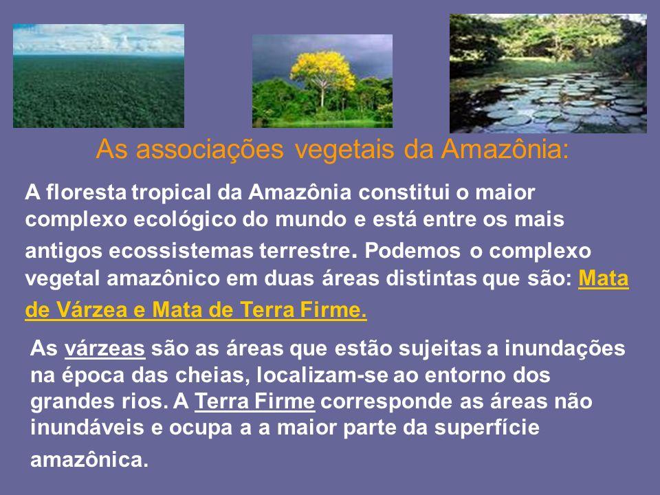 As associações vegetais da Amazônia: