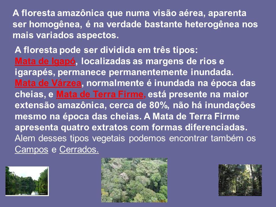 A floresta amazônica que numa visão aérea, aparenta ser homogênea, é na verdade bastante heterogênea nos mais variados aspectos.