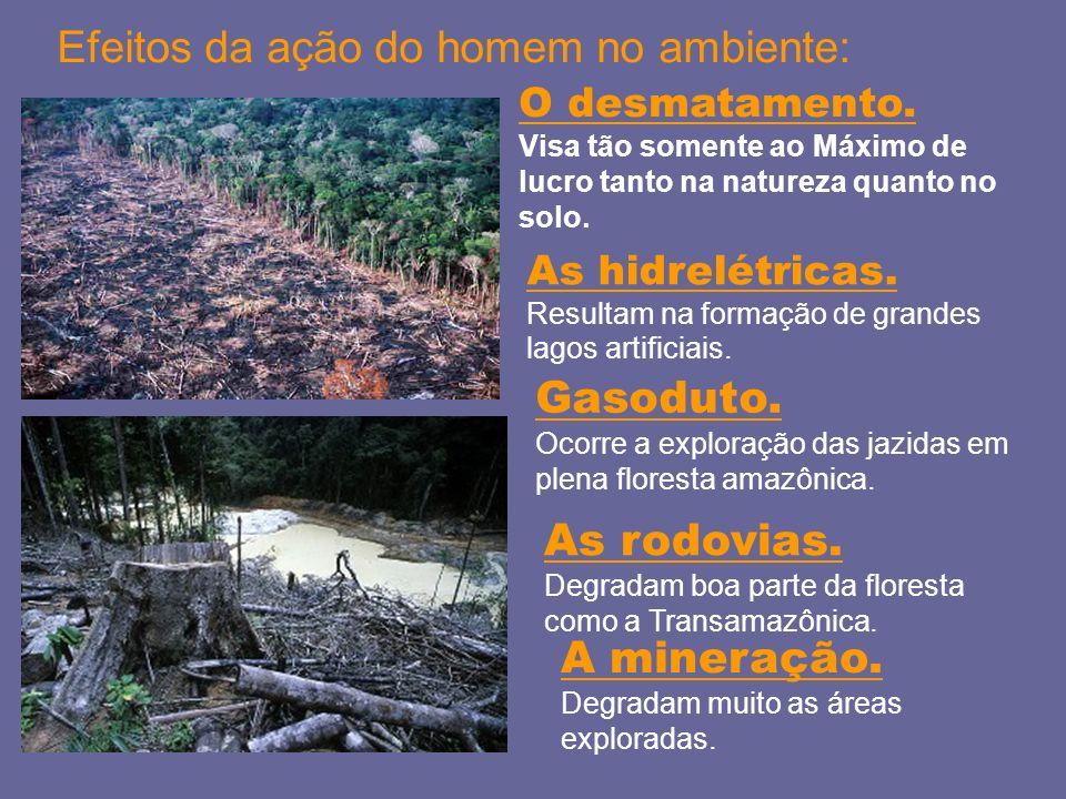 Efeitos da ação do homem no ambiente: