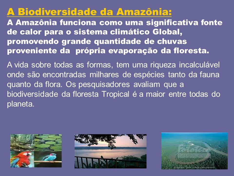 A Biodiversidade da Amazônia:
